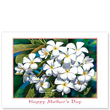 Plumeria - Hawaiian Collectors Edition Greeting Cards - Mother's Day Card