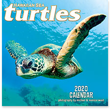 Hawaiian Sea Turtles - 2020 Deluxe Hawaiian Wall Calendar