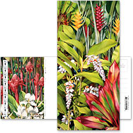 Rainforest - Hawaiian Foldable Postcards