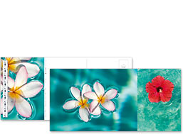 Hawaiian Flowers - Hawaiian Foldable Postcards