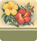 Hawaiian Hibiscus - Hawaiian Gift Enclosure Card