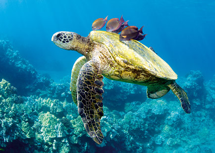 Honu and Friends - Personalized Greeting Card