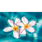 Aqua Plumerias - Hawaiian Everyday Blank Greeting Card