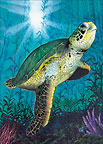 Turtle - Personalized Greeting Card