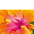 Sunrise Hibiscus - Personalized Greeting Card