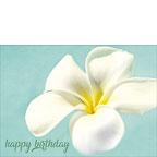My Hope Carries Me ... - Hawaiian Happy Birthday Greeting Card