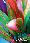 Nice Curves - Hawaiian Mahalo / Thank You Greeting Card
