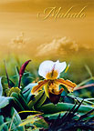 Heavenly Dew - Personalized Greeting Card