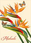 Paradise & Butterflies - Personalized Greeting Card