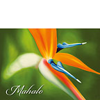 Pretty Bird - Hawaiian Mahalo / Thank You Greeting Card