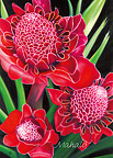 Torch Ginger - Hawaiian Mahalo / Thank You Greeting Card