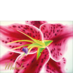 Stargazer Lily - Hawaiian Mahalo / Thank You Greeting Card