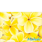 Sunshine Plumeria - Personalized Greeting Card