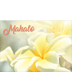 Na Lei Pua Melia Aloha E Ko Lele - Hawaiian Mahalo / Thank You Greeting Card
