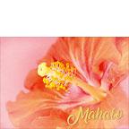 Peace is every Step - Hawaiian Mahalo / Thank You Greeting Card