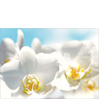 White Orchids Messengers of Light - Personalized Greeting Card