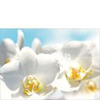 White Orchids Messengers of Light - Hawaiian Wedding Greeting Card