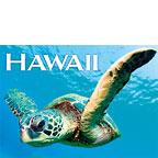 Hello Turtle - Hawaii Magnet