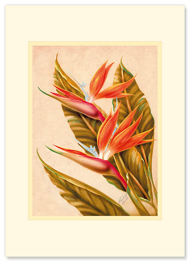 Bird Of Paradise - Personalized Vintage Collectible Greeting Card