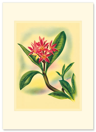 Plumeria - Personalized Vintage Collectible Greeting Card