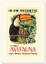 Avifauna Bird Park: Holland - Toucan - Premium Vintage Collectible Blank Greeting Card