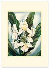 White Ginger - Personalized Vintage Collectible Greeting Card