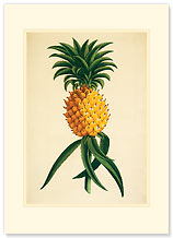Ho'okipa - Hawaiian Premium Vintage Collectible Blank Greeting Card