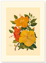 Hawaiian Hibiscus - Hawaiian Premium Vintage Collectible Greeting Card - Anniverasry Card