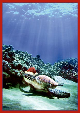 Turtle Santa - Personalized Holiday Greeting Card