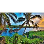 Where da Coconuts Grow - Hawaiian Everyday Blank Greeting Card