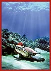 Turtle Santa - Hawaiian Holiday / Christmas Greeting Card