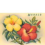Hawaiian Hibiscus - Personalized Greeting Card