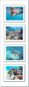 Grouped Photo # 7 - Premium Double Matted Giclée Art Print