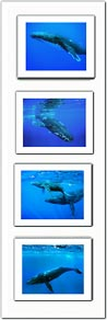 Grouped Photo # 10 - Premium Double Matted Giclée Art Print