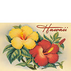 Hawaiian Hibiscus - Hawaii Magnet